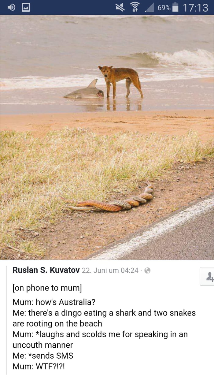 Ruslan S. Kuvatov  [on phone to mum]  Mum: how's Australia?  Me: there's a dingo eating a shark and two snakes are rooting on the beach  Mum: *Iaughs and scolds me for speaking in an uncouth manner  Me: *sends SMS  Mum: WTF?!?!
